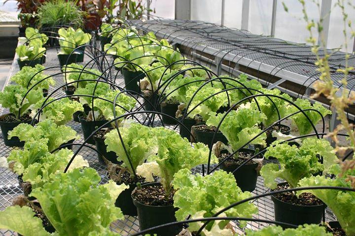 Nhu cầu về nước của cây trồng và hệ thống tưới phù hợp cho nhà kính