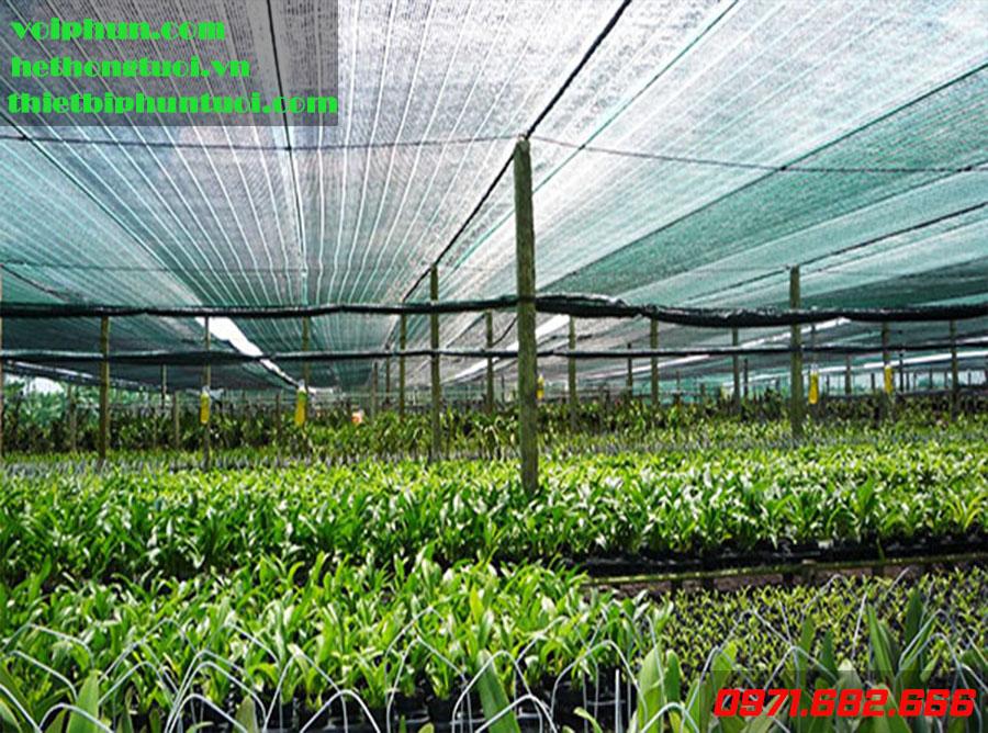 Màng LDPE che phủ nông nghiệp