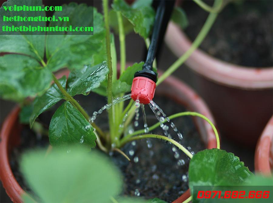 Bạn muốn mua hệ thống tưới nhỏ giọt cho vườn trên mái tại Hà Nội?