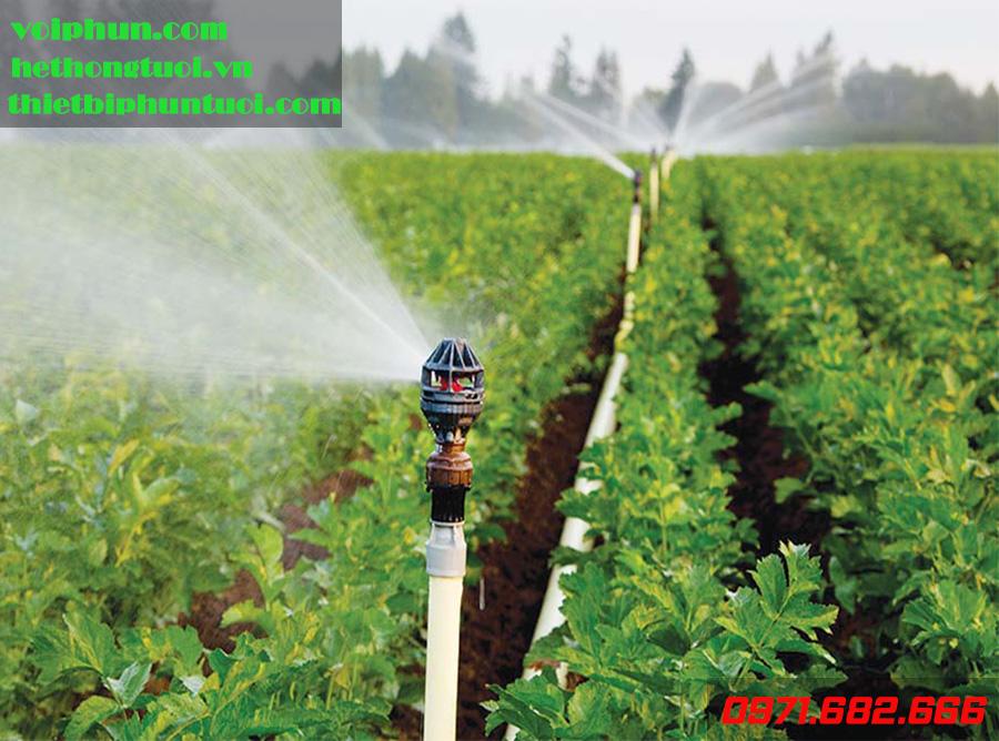 Tưới nước cho vườn cây ăn quả