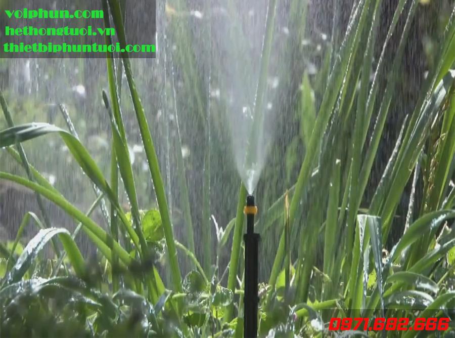 Những sai lầm khi tưới nước cho rau bạn tuyệt đối không được làm theo