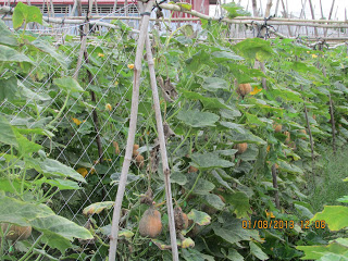 lưới cước làm giàn leo, dây làm giàn leo, lưới cước làm giàn leo cây, lưới làm giàn bí, lưới làm giàn gấc