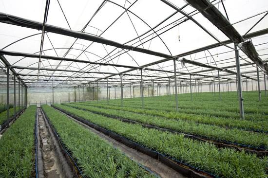 Hiệu quả mô hình trồng rau trong nhà kính