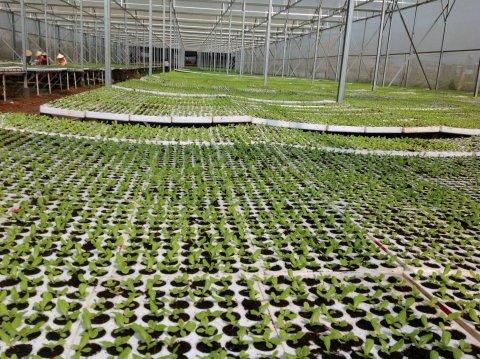 Nhà kính nông nghiệp công nghệ cao
