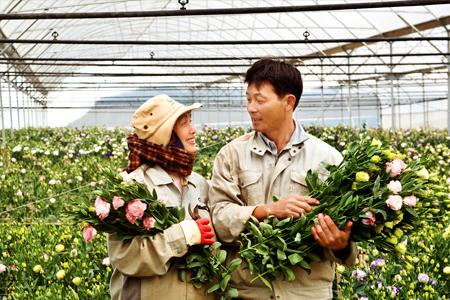 Trồng hoa trong nhà kính mang lại hiệu quả kinh tế cao