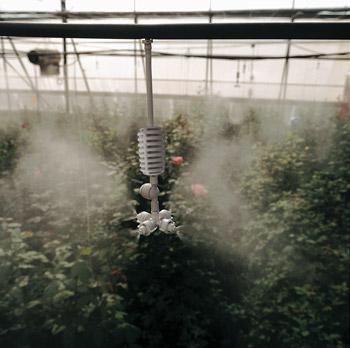 Bộ tưới phun sương tự động trọn gói cho khu vườn có kích thước 84m2