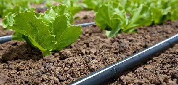 Vật tư nhà kính trồng rau sạch, hoa màu (thanh nẹp, lò xo gài, zic zac, máng xối, cột...)