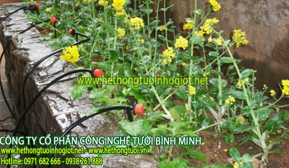 Hệ thống tưới nhỏ giọt tự động áp dụng có khu vườn có diện tích 5000m2