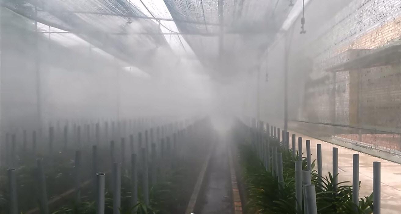 Cách lắp đặt hệ thống tưới phun sương tự động
