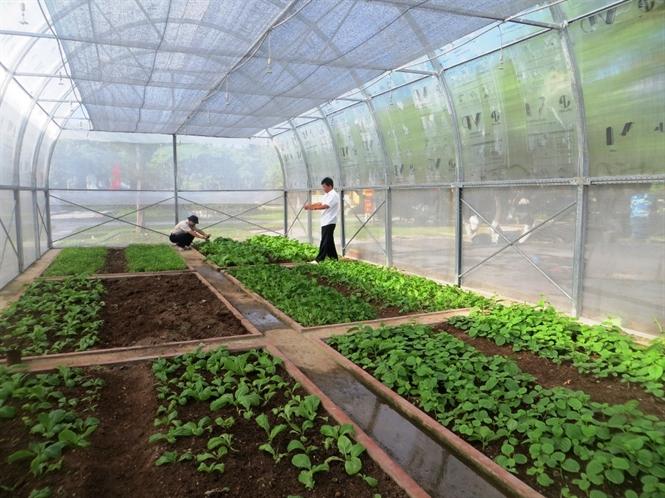 Bảng báo giá nhà lưới trồng rau mới nhất