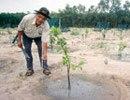Một lão nông chế ra hệ thống tưới cây tự động