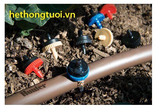 Tưới nhỏ giọt tiết kiệm nước cho cây hồ tiêu tại Đăk Nông