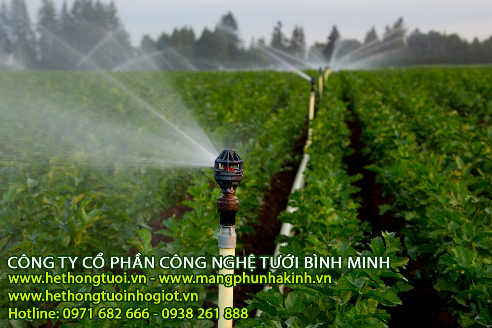 5 phương pháp tưới nước cho cây ăn trái hiệu quả