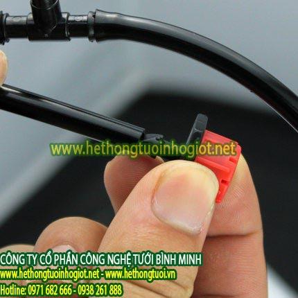 Tưới nhỏ giọt  Lâm Đồng: Bỏ làm kỹ sư về trồng phúc bồn tử thu gần 1 tỷ